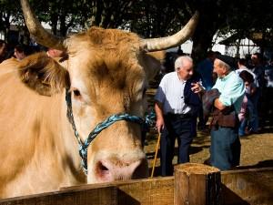 Elizondo Feria-de-ganado 6846 Patxi-Uriz